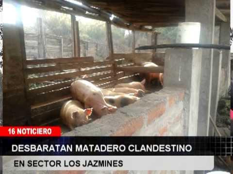 05 MATADERO CLANDESTINO