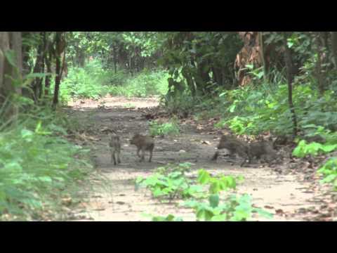 Conservation Through Cameras