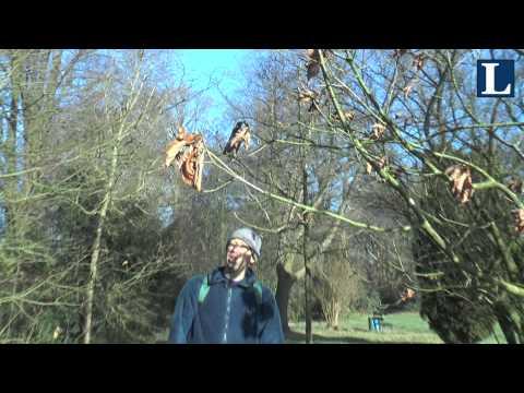 Winterse natuur in het Arboretum van IJsselvliedt
