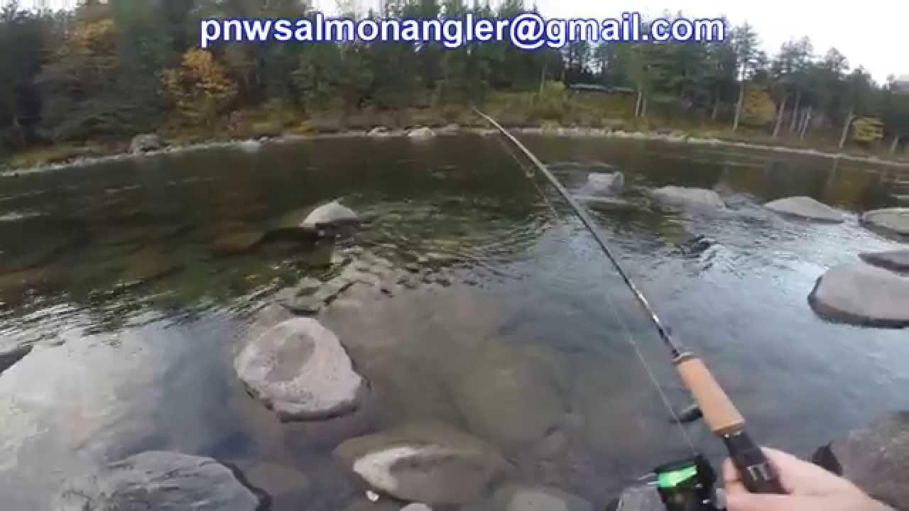 Summer run steelhead skykomish river fishing media for Snohomish river fishing
