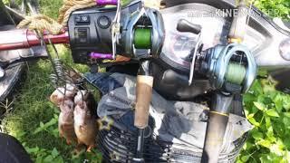 Câu cá ngưa đa tôn ăn uống sinh thái