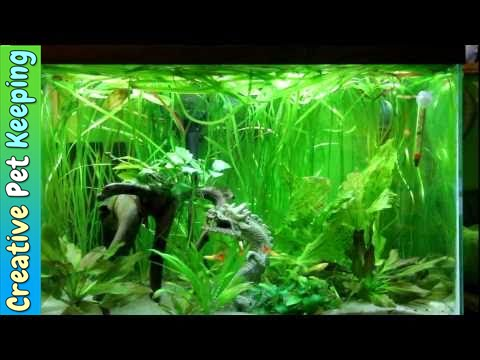 Betta and guppy community fish tank youtube