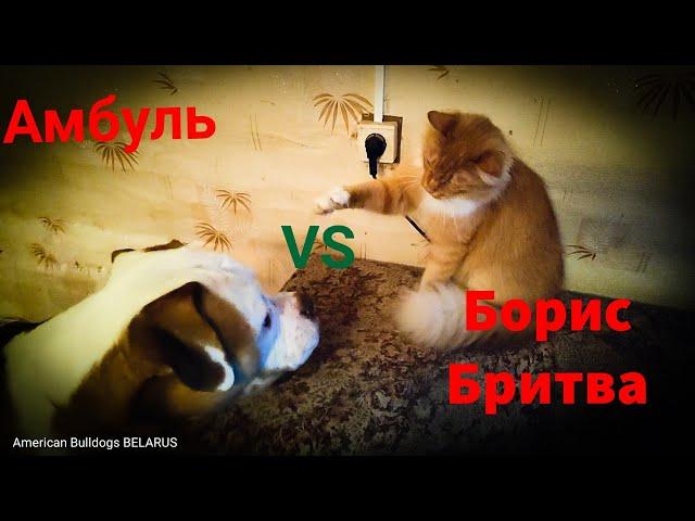Амбуль Джонни и Борис Бритва/Гравий для кур/Лечим грубку