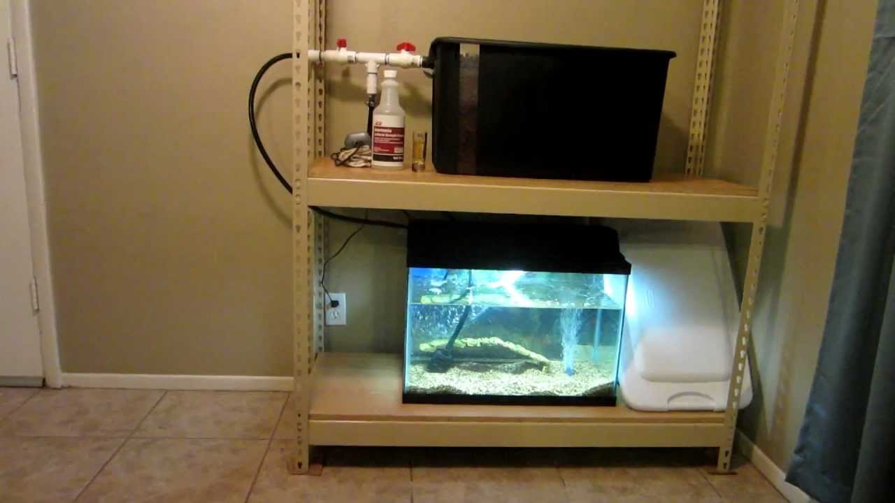 Indoor Aquaponics with 20 Gallon Tank Part 3 - YouTube