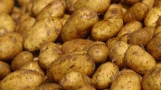Watch Barleyjuice Potatoes video