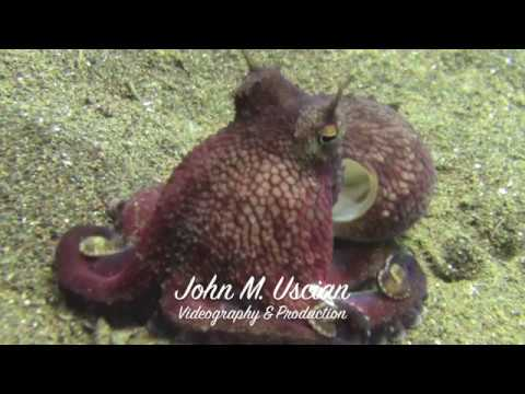 Marine Life of Bali I:  When There Were Coral Reefs on Our Planet