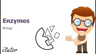 √ Enzymes in Biology | iitutor