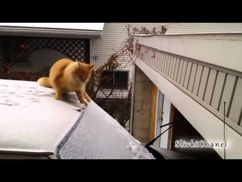 ПРИКОЛЫ и неудачи 2015 Январь Fail compilation, Funny videos January 2015 #28