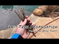 Lagu Fruit Tree Propagating - Mini Greenhouse Method