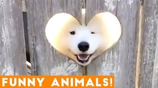 Funniest Pets & Animals of the Week Compilation October 2018 | Funny Pet Videos