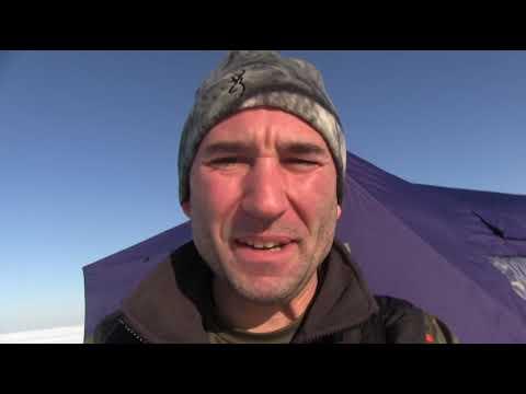 insane ice fishing!  lake erie walleyes