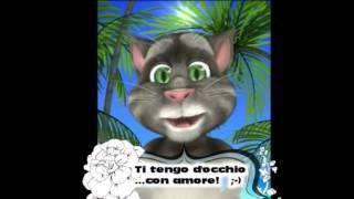 Il Gatto Tom Ti Tiene D'occhio...