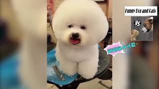 Funny Dog and Cats | Funny Short and Funny Videos of Dogs and Cats 2019 #16