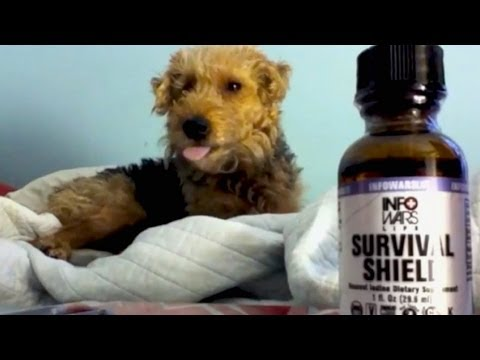 Fukushima: Save Dogs Life From Radiation w/ Iodine