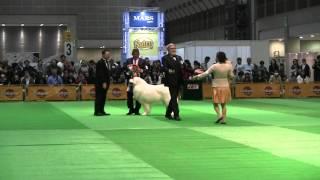 2016.4.3 FCI Japan International Dog Show (B.I.S)