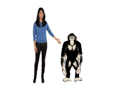 Why Are Chimps Stronger Than Humans? - Instant Egghead