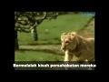 Viral kisah sedih singa dan tuannya dapat mengalirkan air mata thumbnail