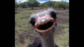 Mauritius Zoo   Encounter with the Wild   Funny Animals   Funny moments caught on camera