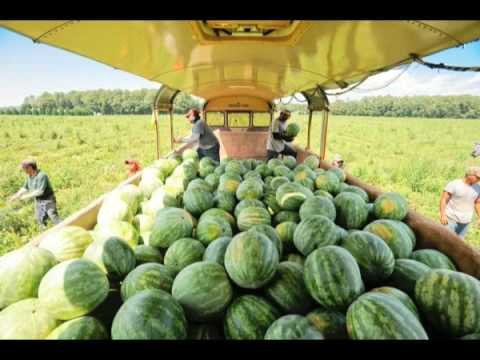 Hales Farms Watermelons Youtube