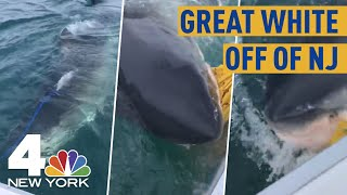 Great White Shark Swims Up To Boat off of NJ Coast, Chomps Bait Bag In Wild Video   NBC New York
