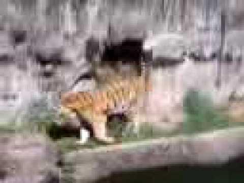 天王寺動物園4