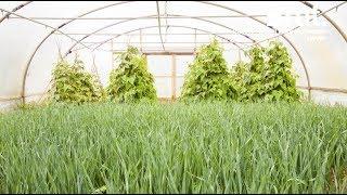 Ouça Faire pousser ses plantes en musique : une alternative aux pesticides ?