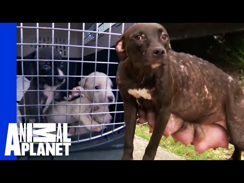 Heartbreak and Euphoria for Mama Dog and Her Pups