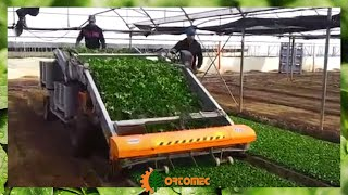 ORTOMEC 8500 - RACCOLTA VALERIANA SUPER VELOCE - HARVESTING OF CORN SALAD HIGH SPEED