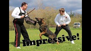 Pro-Celebrity Protection Dog Demonstration by Kraftwerk K9