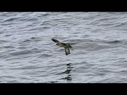 2010 48B NZ Foveaux Strait