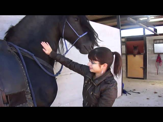 Montando al caballo de Alejandro Magno (XD)