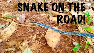SNAKE on the Road - Thailand HD 720p