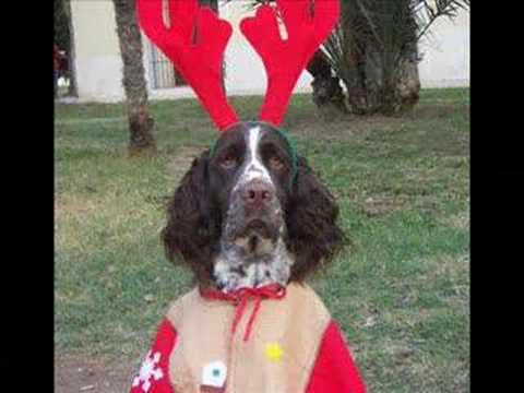 English Springer Spaniel foto history Video