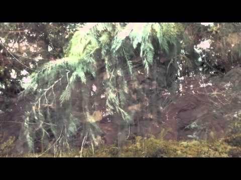 Tsmn - X X (trailer) video