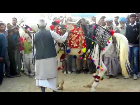 Dancing Marwari Horse Rush Tv Hanumangarh Horse Fair India 2012 video