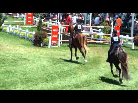 Saddle Horses shown at the Derby in Kyalami