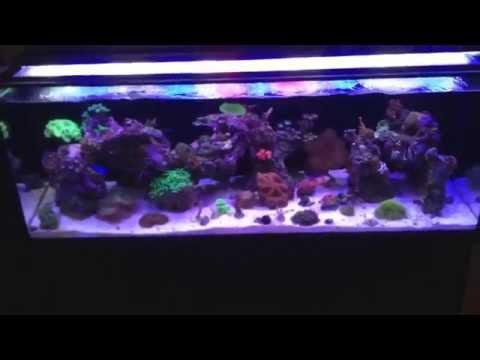 Innovative marine fusion 30l 3 week update
