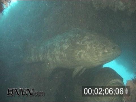 7/24/2005 Baja California Shipwreck - Goliath Grouper Video