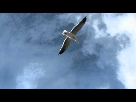 seagulls soaring in the wind