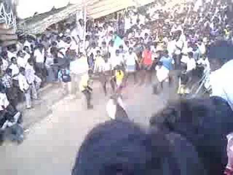 Thammampatty Jallikattu 2007 video