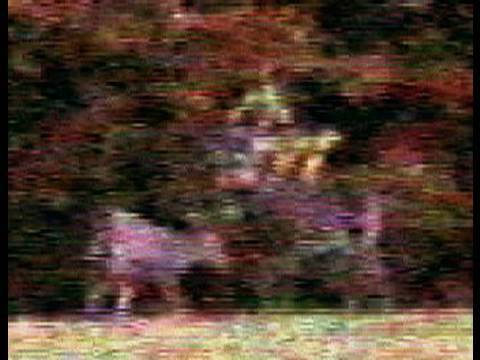 Monster Non-typical Whitetail Moose-Sized in group of large bucks Video