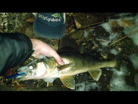 2kg Walleye From Shore Night Fishing Street Edit Youtube
