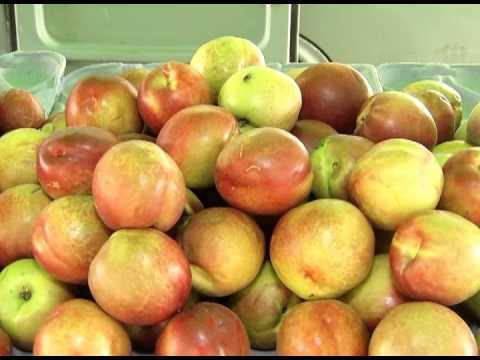 Dia de Feira  - Frutas