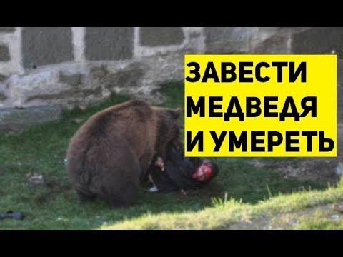 Нападение медведя в Семилуках. Смерть и дебилы