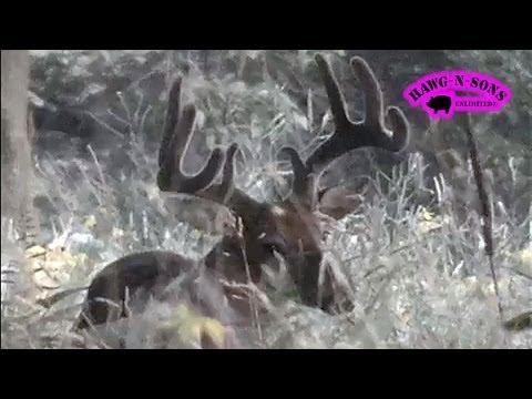 Running Down Big Bucks on Foot August 11 ONLY on HawgNSonsTV! Video