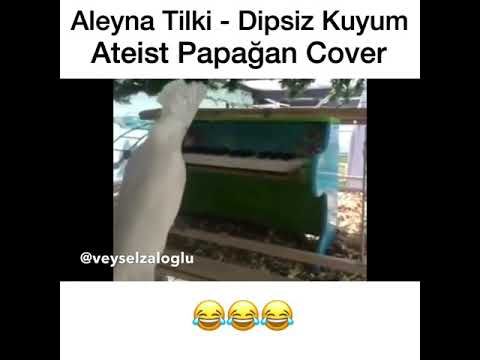 Aleyna Tilki - Dipsiz kuyum Ateist Papağan Cover