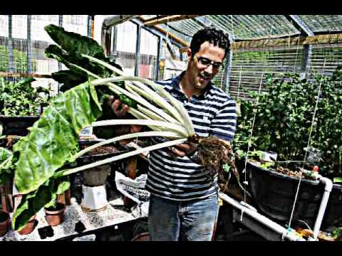Hydroponics For Beginners  Hydroponic
