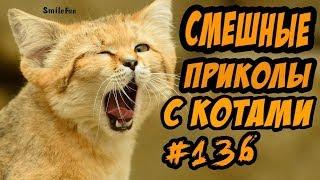 Смешные коты ДО СЛЁЗ Приколы с Котами и Кошками 2018