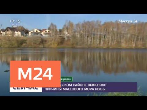 В Подольском районе выясняют причины гибели рыб - Москва 24