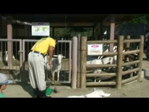 20091003150641東山動物園